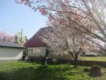 飯塚雅幸&藤間知枝の自宅屋敷内は「春爛漫」「桜」たちが今を盛りに咲き誇っています。