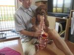 飯塚雅幸&藤間知枝自宅の犬「チョコ」はサックスを吹きたがります。