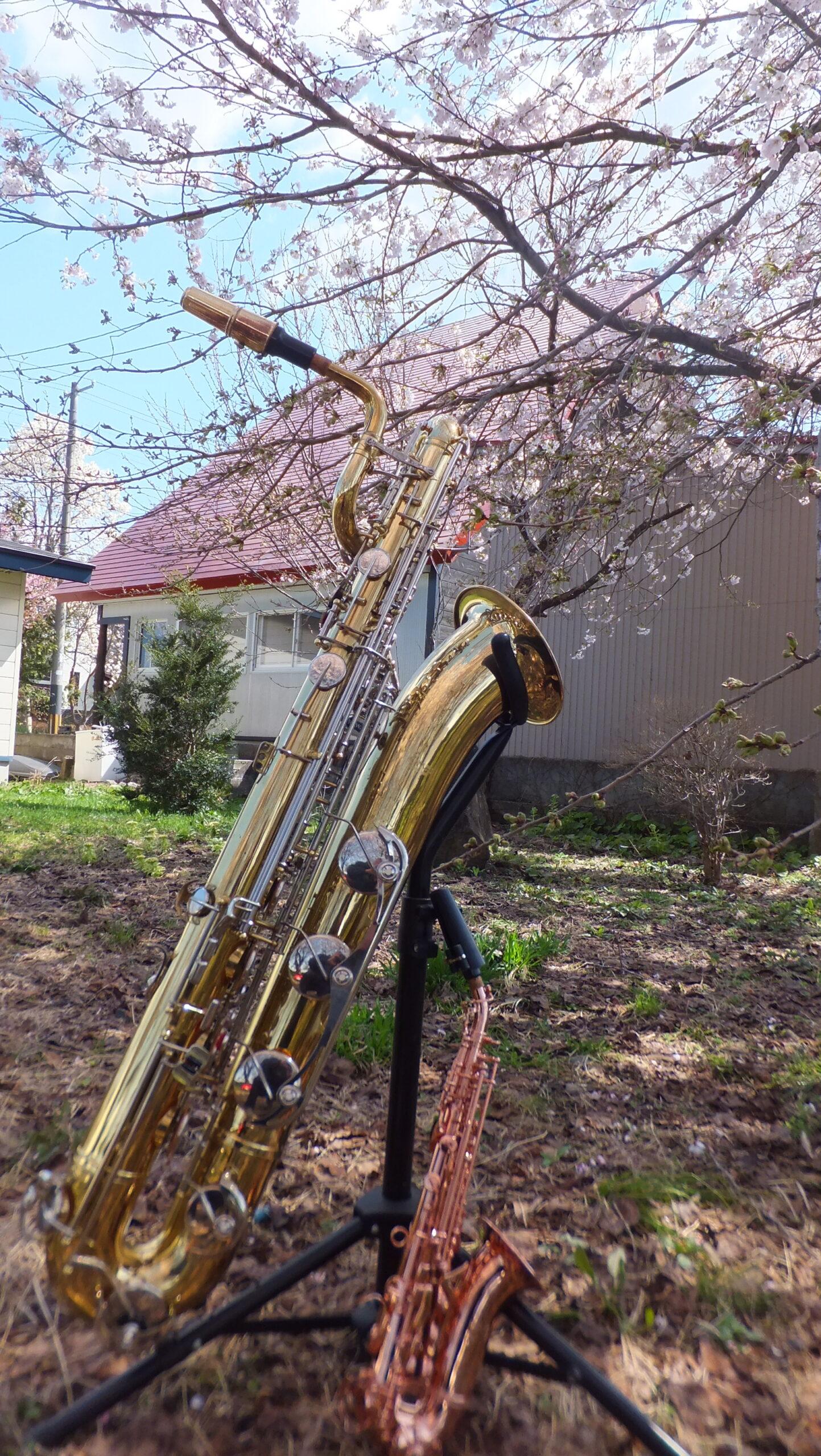藤間知枝の自宅「藤間流・日本舞踊稽古場」の庭に咲いた小桜達が踊っています。